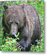 Grizzly Claws Metal Print