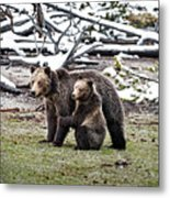 Grizzly Cub Holding Mother Metal Print