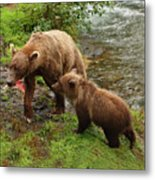 Grizzly Dinner For Two Metal Print