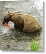 Grizzly Great Catch Metal Print