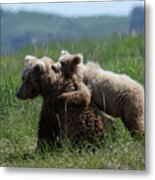 Grizzly  Mother And A Cub In Katmai National Park Metal Print