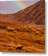 Grizzly Under The Rainbow Metal Print
