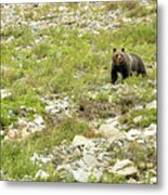 Grizzly Watching People Watching Grizzly No. 2 Metal Print