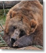 Grizzly's Naptime Metal Print