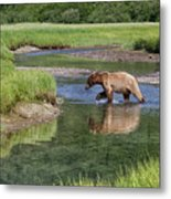 Grizzy Bear Crossing The River Metal Print