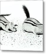 Ground Squirrels Metal Print
