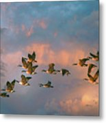 Group Flight Metal Print