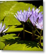 Group Of Lavender Lillies Metal Print