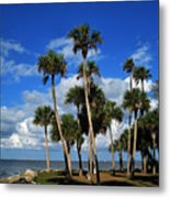 Group Of Palms Metal Print
