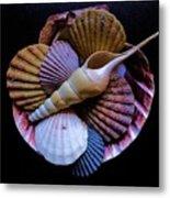 Group Of Shells #1 Metal Print