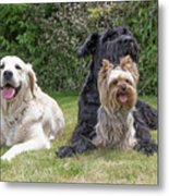 Group Of Three Dogs Metal Print