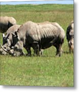 Group Of White Rhino Metal Print
