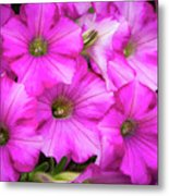 Grouping Of Petunias Metal Print