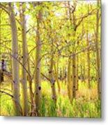 Grove Of Aspens On An Autumn Day Metal Print