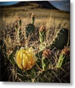 Growing From Volcanos Metal Print