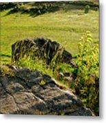 Growing On Rocks. Metal Print