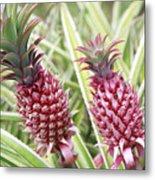 Growing Red Pineapples Metal Print