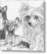 Growing Up Chinese Crested And Powderpuff Metal Print