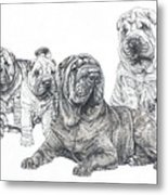 Growing Up Chinese Shar-pei Metal Print