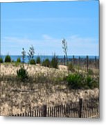 Growth Of The Sea Metal Print