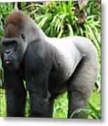 Grumpy Gorilla II Metal Print