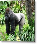 Grumpy Gorilla IIi Metal Print