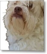 Grumpy Terrier Dog Face Metal Print