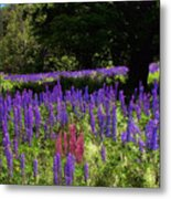 Guardian Of The Lupine Metal Print