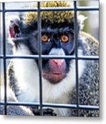 Guenon Monkey Metal Print