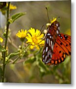 Gulf Fritillary Agraulis Vanillae Red Butterfly Metal Print