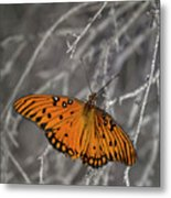Gulf Fritillary Butterfly In The Brambles Metal Print
