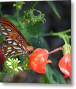 Gulf Fritillary Butterfly On Beautiful Flowers  Metal Print