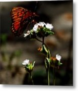 Gulf Fritillary Butterfly Too Metal Print
