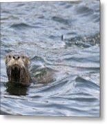 Gulf Islands Otter Metal Print