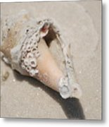 Gulf Of Mexico Shell Metal Print