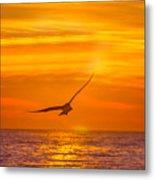 Gull At Sunrise Metal Print