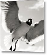 Gull In Flight 2 Metal Print