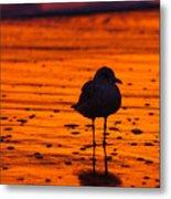 Gull Caught At Sunrise Metal Print
