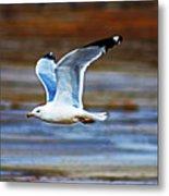 Gull Inflight Metal Print