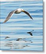 Gull Mirrored Metal Print