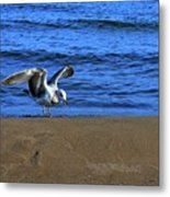 Gull On The Beach  Metal Print