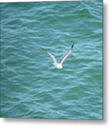 Gull Over The Gulf Metal Print