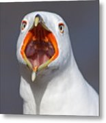 Gull Portrait Metal Print by Mircea Costina Photography