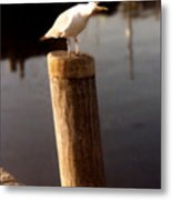 Gull Warning Metal Print