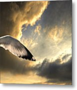 Gull With Approaching Storm Metal Print by Meirion Matthias