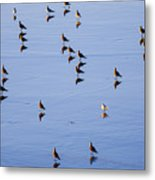 Gulls And Reflections Dot The Water Metal Print