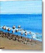 Gulls At Play Metal Print