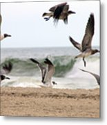 Gulls Away Metal Print