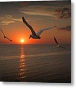 Gulls Flying Towards The Sun Metal Print