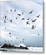 Gulls Of Carmel Metal Print